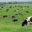 कृषीपूरक उद्योगांना तिकीट शुल्क (फी)ठेऊन मिळवा अधिक नफा