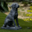 तुमचे सगळे प्रश्न सोडविणारा Lucky Dog